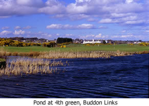 Pond at 4th, Buddon Links
